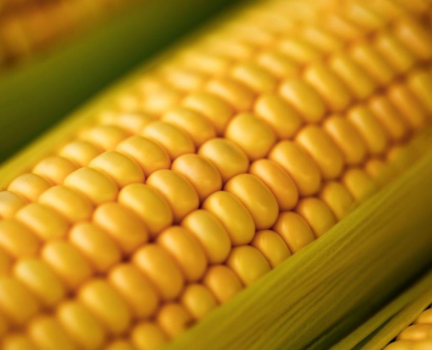 OZ - Bio Mais für Cornflakes